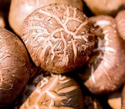 송화버섯(200g)